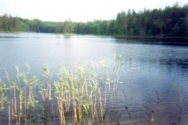 Карельское озеро (Карелия 2002)