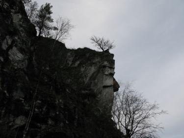 Дерево (Рускеала 2007)