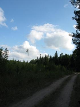 Дорога (Лух 2010)