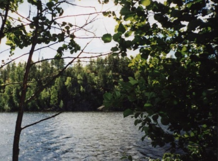 Лес  (Карельский 2001)
