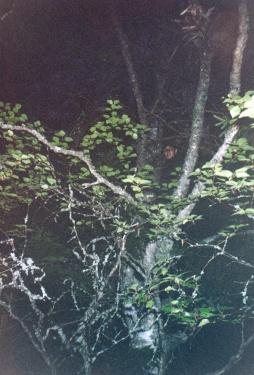Али на дереве (Карелия 2003)