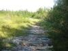 forest hiway (Ловозерье 2009)