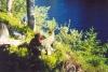 Черничный привал (Карелия 2003)