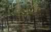 Карельский лес (Карелия 2002)