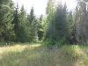 Леса Ивановской области (Лух 2010)
