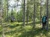 Лесок посреди болот (Ловозерье 2009)