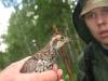 Птица (Урал 2007)