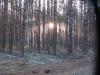 Дымка рассвета (Лух 2010)